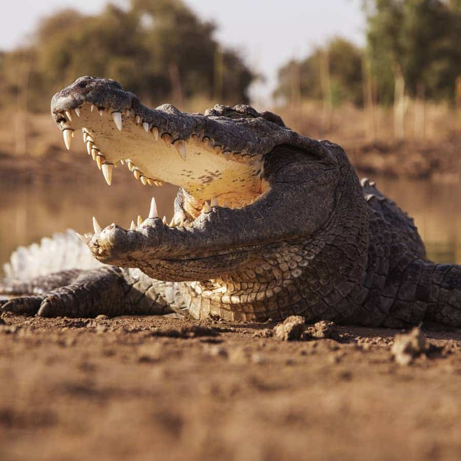Babi-Babi safari-chasse Namibie Crocodile - FR