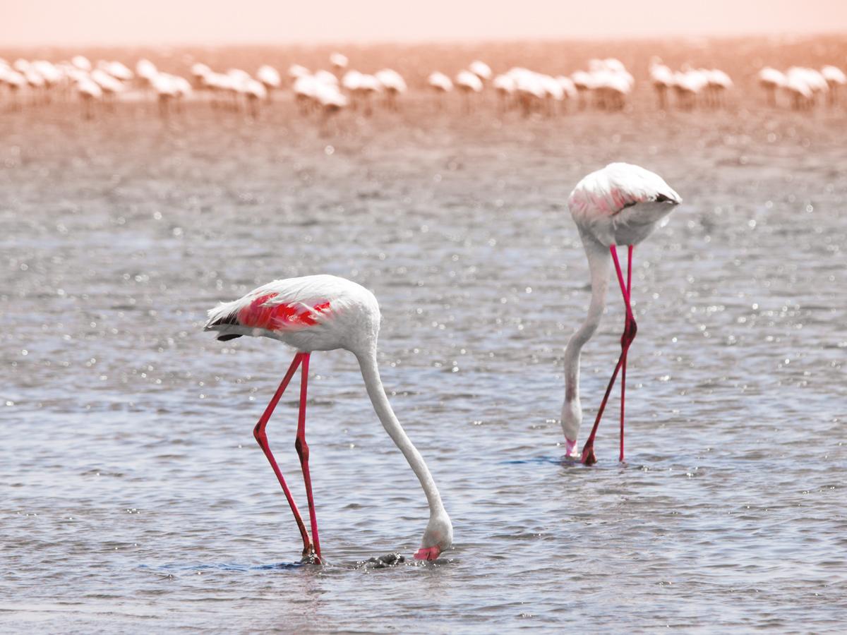 Babi-Babi hunting safari Namibia Flamingo - EN